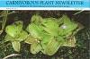 Carnivorous Plant Newsletter - Volume 36, Number 1