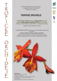 Výstava Tropické orchideje